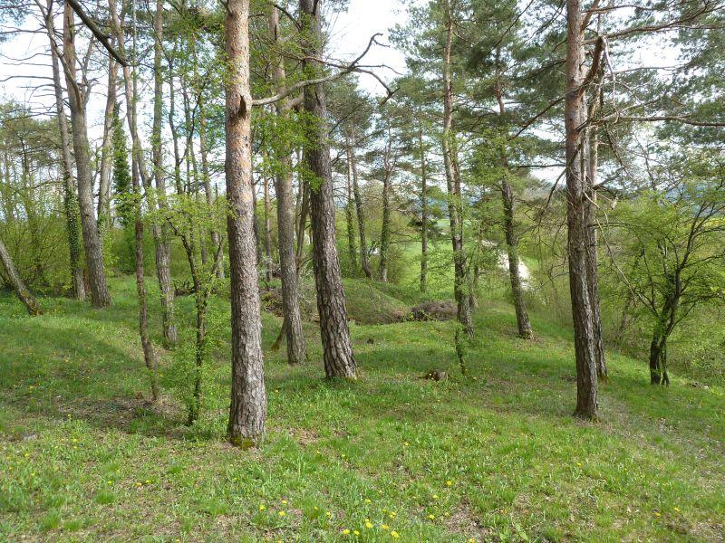 Lichter Föhrenwald